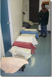 Row of cats in traps in clinic.